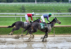 2016-08-21 (38) r9 Feargal Lynch on #5 American Progress (JLeeFleenor) Tags: photos photography md maryland laurelpark racing jockey   jinete  dokej jocheu  jquei okej kilparatsastaja rennreiter fantino    jokey ngi horses thoroughbreds equine equestrian cheval cavalo cavallo cavall caballo pferd paard perd hevonen hest hestur cal kon konj beygir capall ceffyl cuddy yarraman faras alogo soos kuda uma pfeerd koin    hst     ko  wet muddy xavierperez xman
