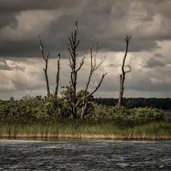 Cormorant island (Piotr_PopUp) Tags: cormorant kormoran kisajno lake laguna island trees green square squared 1x1 landscape water mazury poland polska dobskie jezioro jeziorodobskie