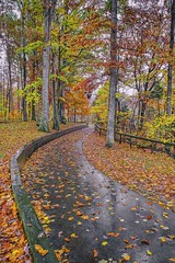 All paths lead to Fall. (Bernie Kasper) Tags: art berniekasper cliftyfallsstatepark cliftyfalls color d600 effect family fall hiking jeffersoncounty kasper madisonindiana madisonindianacliftyfallsstatepark nature nikon naturephotography landscape light leaf leaves outdoors outdoor old outside orange red raw road path travel tree trees trail statepark rain wet woods water wood