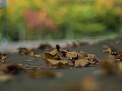 colourfully (sprytnyiwybitny) Tags: takumar 50mm smc f14 m42 manual vintage bokeh autumn colourfully olympus digital camera em10