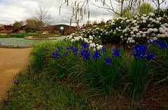 Mayfield Gardens Oberon, NSW (bmeup) Tags: mayfieldgardens oberon nsw