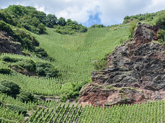 rzig (CORMA) Tags: allemagne deutschland germany moselle mosel 2016 europe europa rzig vineyard vignoble weinberg