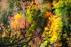 Brancher Baring (photo fiddler) Tags: trail mabou novascotia autumn leaves branches bare october 2016