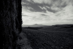 val d'orcia, toscana (trevis_lu) Tags: photo landscape paesaggio valdorcia toscana tuscany bianconero blackwhite nikondf nikkor24mmf2