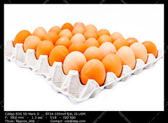 Egg in a carton (__Viledevil__) Tags: dairy product egg carton box brown chicken container eggs eggshell food foodstuff fragile freshness groceries healthy ingredient protection raw uncooked dairyproduct eggcarton