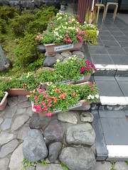 Flowerpots at the entrance (seikinsou) Tags: japan nikko autumn yashio yashionoyu spa onsen bath building hotspring flowerpot plant colour snapdragon antirhinum