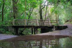 Camping Heredia Barva (Javier Montenegro Tijerino) Tags: bridge puente adventurepark heredia