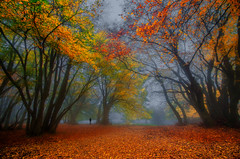 Autumn in the Forest of Canfaito (emanuelezallocco) Tags: forest autumn fall winter 2016 canfaito mountains nature colors yellow leaves foglie red rosse giallo autunno inverno foggy nebbia big tree