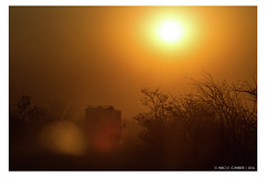 Driving to the sun (Mirko Daniele Comparetti) Tags: na africa namibia auto bush car driving dust flickr geotagged guida namibiadiscovery2016 piante polvere silhouette sunset tramonto