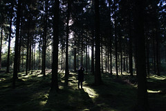 (esmeecadoni) Tags: woods europe netherlands beautifulearth trees tree sky sony sunlight sun outdoor autumn sunrise simple holland morning photography light littlethings landscape green forest fall drenthe backlight nature