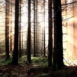A hidden sun shines as well thumbnail