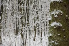 ckuchem-1621 (christine_kuchem) Tags: baumrinde buche bume eiche eis frost hainbuche natur pfad pflanzen ruhe samen spuren stille struktur wald weg wildpflanzen winter einsam kalt schnee ste