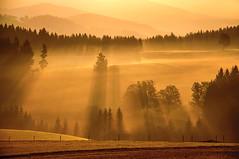 Morgenstund hat Gold ... (Mariandl48) Tags: sonnenstrahlen morgenstimmung schatten licht morgensonne wiese wald feld sommersgut wenigzell steiermark austria morgennebel
