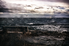 Weather Report (Natalia Medd) Tags: weather report storm seagull bird waves bench rain wind sea autumn fall ocean sky clouds nature landscape outdoor grass stormy beach seaside