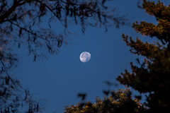 Moonrise (Phil Roeder) Tags: desmoines iowa canon6d canonef70200mmf4lusm moon trees bluesky morning
