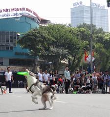 Caught! (program monkey) Tags: oldquarter vietnam hanoi catch dog frisbee