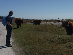 Cool walk (Alta alatis patent) Tags: netherlands vlieland highlander scottish frans waddenislands heckrunderen