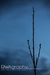 088/365 - 04/05/13 (Dan Fava) Tags: sunset tree apple silhouette clouds canon eos iso100 evening sunday 100mm   70200mm     35 canoneos5dmarkiii 5dmarkiii ef70200mm28lisiiusm lens:id=251 datetaken:year=2013 datetaken:month=05 datetaken:minute=57 datetaken:hour=19 datetaken:second=40 datetaken:day=05 datetaken:dow=sunday datetaken:date=20130505