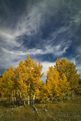 L1004844 (hweiviolin) Tags: leica lake fall colors tahoe super foliage aspen elmar brockway m9p