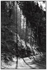 Shadow (vor morgen) Tags: autumn blackandwhite forest fotografie herbst natur holz wald bume umwelt nativecountry
