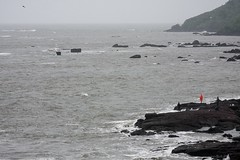 orange (shyamyag) Tags: cat bird crow goa color sea beach rain rains monsoon india incredibleindia