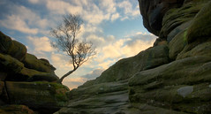 Brimham Rocks Tree (Andy Watson1) Tags: brimham rocks tree yorkshire dales national park loner lone lonely nationaltrust england english uk united kingdom great britain british landscape view scenery scenic countryside rock winter sky clouds erosion eroded shadow light travel trip canon 70d sigma moss