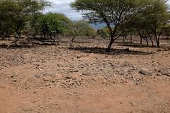 PWS02076 (paulshaffner) Tags: tanzania oldoinyo lengai dorobo safaris dorobosafaris safari education abroad studyabroad penn state pennstate biology pennstatebiology