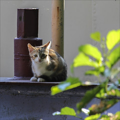 Chaton carrment chou (chando*) Tags: barge bateau boat carr cat chat chaton kitten pniche ronquires square