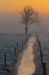 Time to reflect (zebedee1971) Tags: landscape tree fog dawn sunrise orange water drain irrigation mist fence farm farmland pasture cows reflection grass freezing frost sky cloud