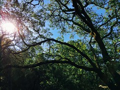 Sun behind the trees (harminder dhesi photography) Tags: snapseed bayarea norcal california sonomacounty sonoma santarosa outdoors enjoyingtheview nature sun trees summer park view hiking landscape k1 vscocam vsco