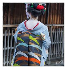 Maiko-san (msankar4) Tags: gion geisha geiko hangyoku maiko kyoto memoir ochaya chaya teahouse sake kimono japan beauty silk inuyarai sudare kaisekiryri noren oksan traditions ryotei msankar sankarraman sankarramanphotography