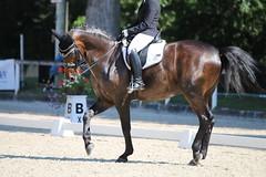 IMG_7595 (dreiwn) Tags: dressage dressur dressuur pferd reitturnier turnierreiten pferdesport horse horseback horseriding equestrian reitverein dressurprfung kandare doublebridle reiten pferde reitplatz ridingarena