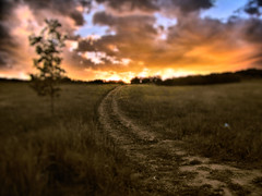 Footsteps from the past... (miss.interpretations) Tags: paths roads journey memory loss footsteps dirt nature thoughts evening night sunset clouds skies tree silhouette life grass fields shadows