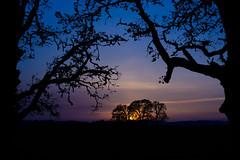Purple Oaks (baseballcf89) Tags: purple sunset sun oaks oak tree trees field sky blue orange black silhouette horizon oregon twilight dusk