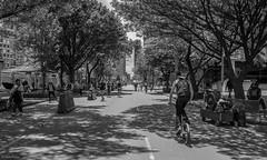 Carrera sptima (Jairo Pez) Tags: carrera septima bogota colombia jairo paez postcards postard paisaje blanco negro noiretblanc blackwhiteaward black white mono monochromatic monochrome capital domingo ciclovia maana morning sunday bike bycicle bicicleta bicicletas canon rebel t3i 600d