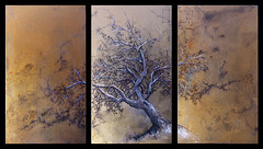 Sughero - tecnica mista su legno (acrilico, china, penna a sfera) circa un metro per 50 cm (Riccardo Martinelli) Tags: albero sughero toscana pittura acrilico paesaggio china penna tree gold