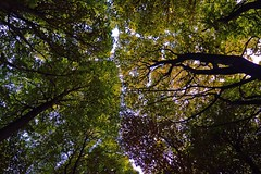 The Canopy (rustyruth1959) Tags: sky nature outdoor green golden branches canopy leaves trees ripponden yorkshire tamron16300mm nikond3200 nikon tree light dark shadow