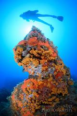 Sunny reef and diver (Nicolas & Lna REMY) Tags: wildlife france marinelife underwater ocean alpesmaritimes antibes revo sponge rebreather inon nauticam reef mediterranea frenchriviera europe ctedazur diving mer mditerrane photography plonge recycleur rcif scuba sea wild ponge