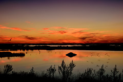 late summer (tom bourdot) Tags: clouds dusk forsythe forsytherefuge gimp lake landscape light marsh mirror nature nikkor nikond3300 nj outside pond refuge serene shadows sky summer sunset water wetlands latesummer bright evening flickr panarama reflections scenery scenic view vista wasser