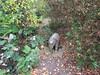 Elephant in the jungle (wallygrom) Tags: england angmering honeylane treehouse