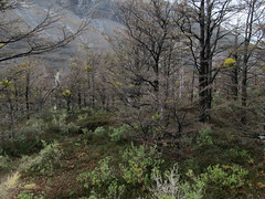 """Torres del Paine: trek du W et toutes ses belles couleurs. <a style=""""margin-left:10px; font-size:0.8em;"""" href=""""http://www.flickr.com/photos/127723101@N04/29596055423/"""" target=""""_blank"""">@flickr</a>"""