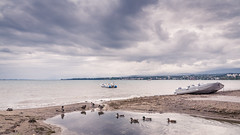FOLLOW ME, WE'LL GOING SO FAR AWAY... (Jeton Bajrami) Tags: boat bateau duck canard lake lac sky ciel nuage cloud clouds nuageux sand sable vaud lausanne switzerland suisse perfect art 2016 sony alpha77ii mkii mk2 a77ii 1650mm