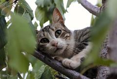 Dina. (Diana Gallego) Tags: gato cat tree rbol mascota pet canon canoneos60d 70300