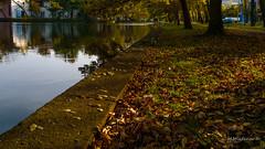 Autumn 010 (Milen Mladenov) Tags: 2016 bulgaria d3200 landscape montana montanesium nikon autumn colors grass leaves orange outdoor park path trees view water waterautumn yellow