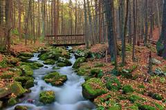 """Babbling Brook"" Fall (DK Photographics) Tags: water forest woods nature stream longexposure exposure topazlabs topaz pentaxk5 pentax k5 collegephotographer"