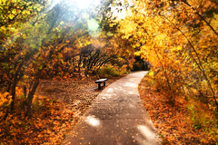 Meeting Place in My Dreams (miss.interpretations) Tags: autumn fall coloradosprings colorado canonm3 focus bench missingyou grief missinterpretations