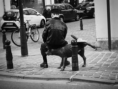 Respect for Zinneke (a.m.a. (alb_yester)) Tags: zinneke bruselas blgica brussels belgium dog street