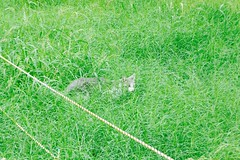 Today's Cat@2016-10-16 (masatsu) Tags: cat thebiggestgroupwithonlycats catspotting pentax mx1 osaka