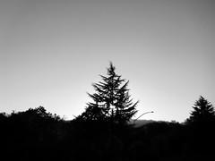 Tree on the Horizon (Rossdxvx) Tags: blackandwhite noir nature tree trees silhouette shadows surreal surrealism abstract art northwest dark horizon treeonthehorizon minimalism naturenoir experimental