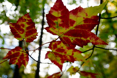 Changing colours (L*Ali) Tags: bonechoprovincialpark nikond7000 sigma1770mmf28macro fall autumn nature leaves colours rocks green red